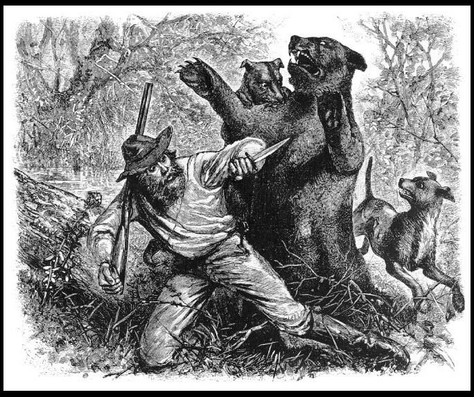 Atak niedźwiedzicy